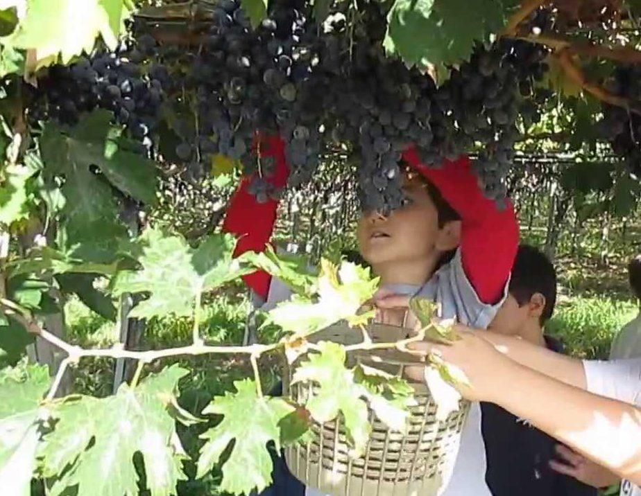 fattoria didattica bergamo